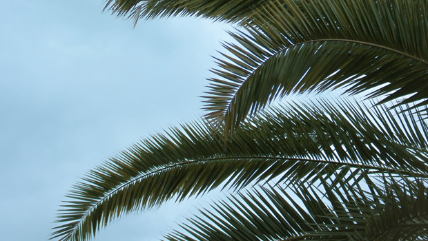 Isolation Reflections: A Not So Strange Palm Sunday