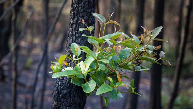 Australian Bushfires Update